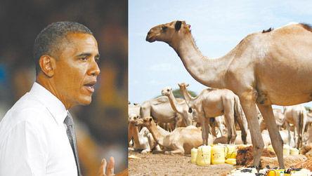 索马里反政府武装赏格10头骆驼缉捕奥巴马